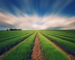 UniCredit Bank si UniCredit Leasing sustin domeniul agricol prin finantari adresate sectoarelor IMM si corporate